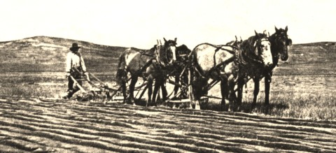 1920cisaac-horsesb